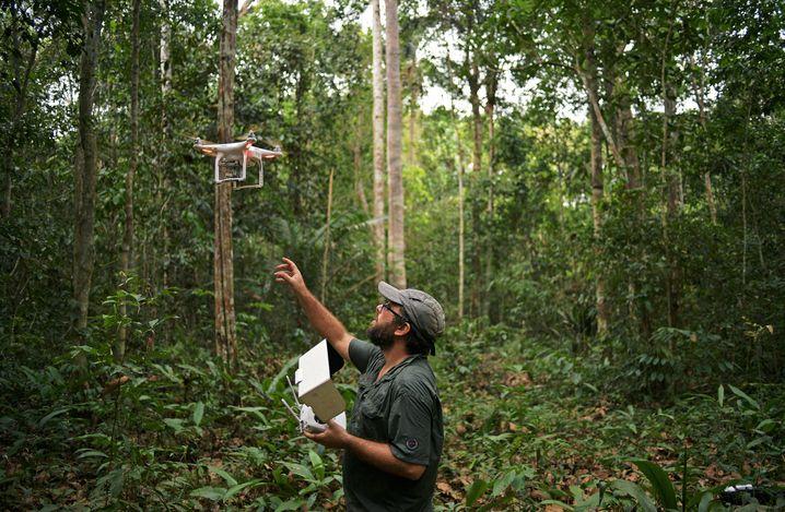 Umweltschützer tracken Waldzerstörung – teils forsten sie auch mit Drohnen und KI-Tools auf
