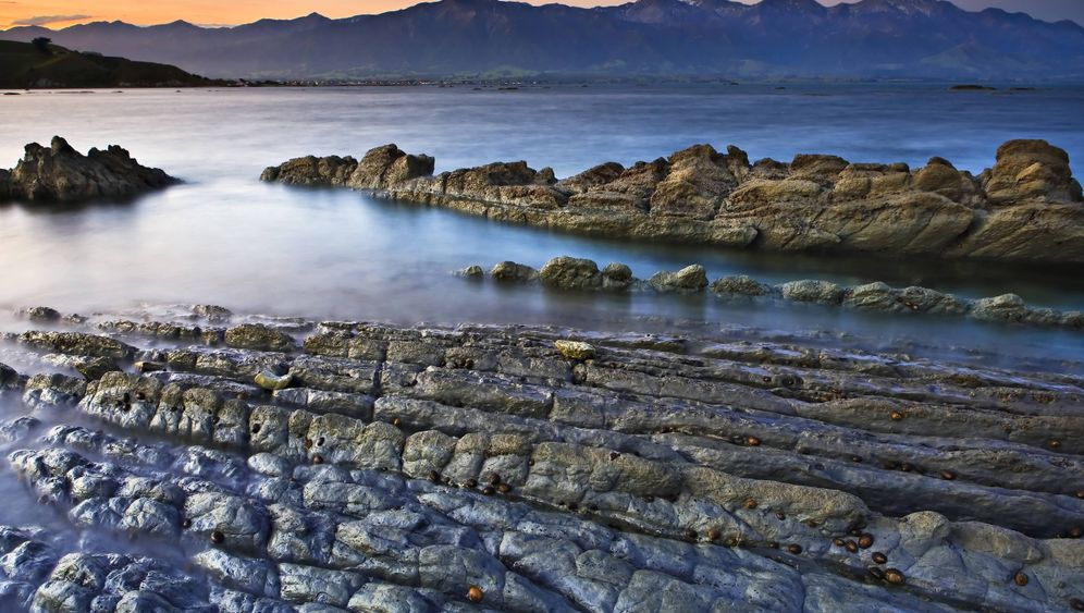 Erdbebenort Kaikoura in Neuseeland: Der Wal ist der Star