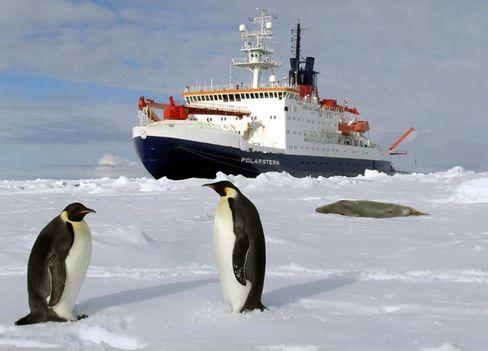 Pinguine vor »Polarstern«