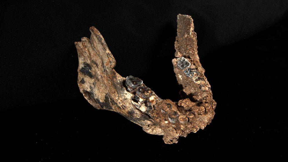 Fossilfunde: Homo erectus' neue Vettern