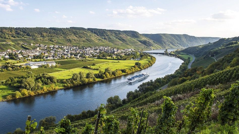 Weinbaugebiet Moseltal bei Wintrich: »Unehrlichkeit macht nicht an der Grenze halt«