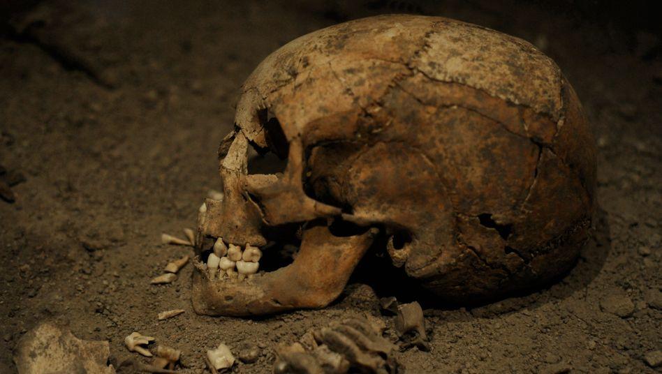 Skelett des Wikinger-Mädchens von Birka: Laut neuen Genanalysen waren längst nicht alle Wikinger blond oder Skandinavier