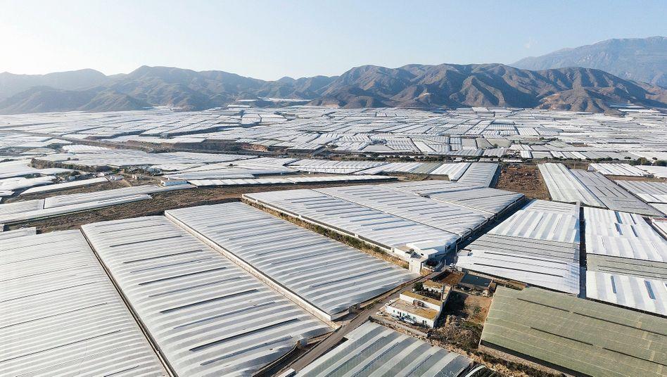 Anbauflächen bei Almería: Hinter der Fassade tobt ein gnadenloser Preiskampf