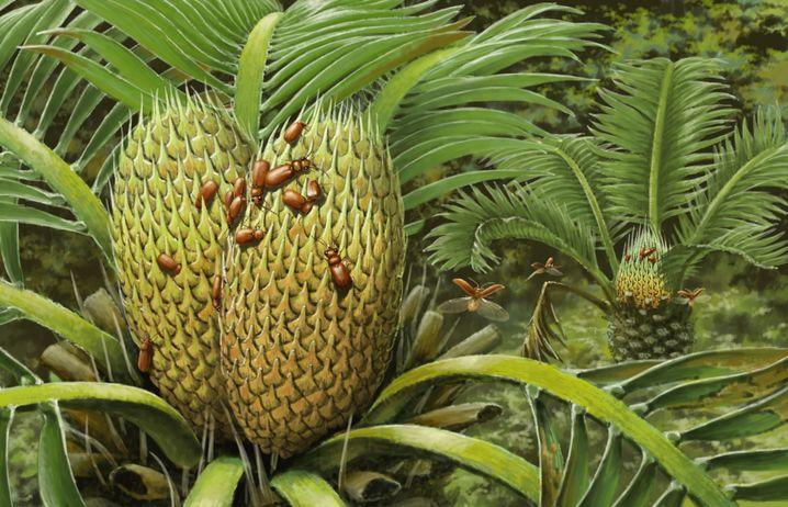 Künstlerische Darstellung der Käfer an einem Palmfarn