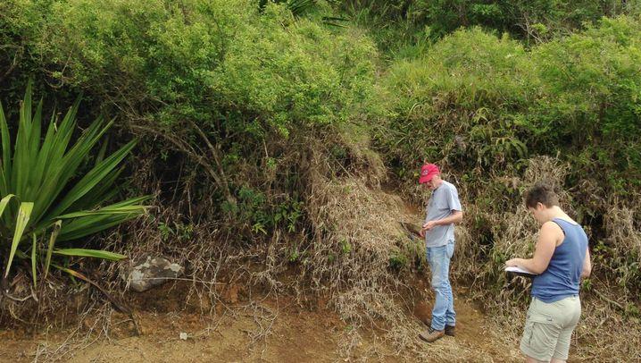 Entdeckung auf Mauritius: Steinalt