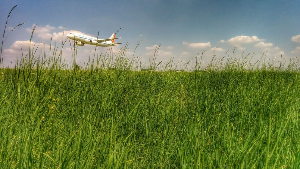 Flugversuch: Insektenjagen für die Wissenschaft