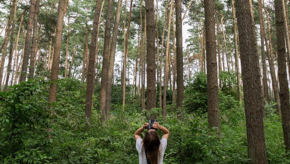 Biologin Vielhaber in einem Wald bei Zinzow: Reifenspuren am Tatort
