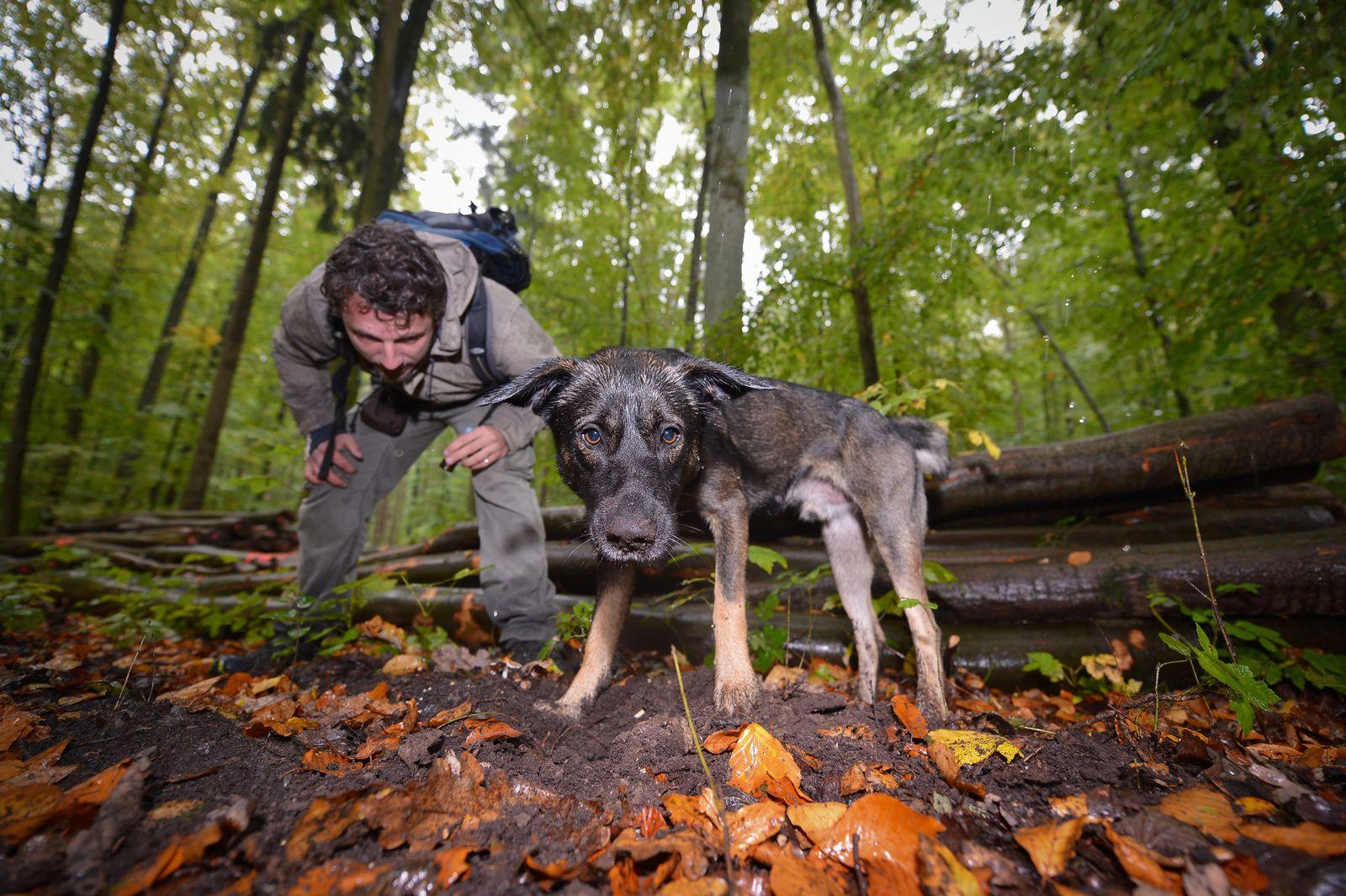 KaSP Ausbildung zum Trüffelsuchhund