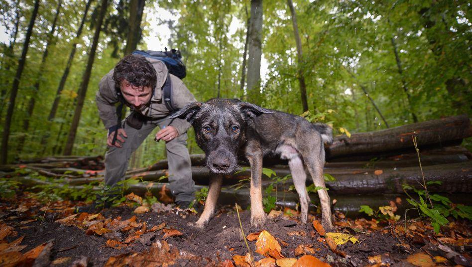 Trüffelsuche: Europäische Jäger und Sammler haben als erste Menschen der Welt Hunde gehalten