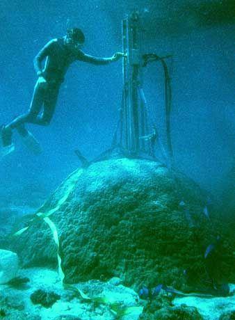 Abgetaucht: Forscher haben sowohl lebende als auch fossile Korallen auf ihre Klimageschichte untersucht