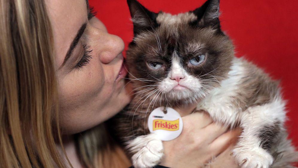 Grumpy Cat: Die wohl berühmteste Katze der Welt