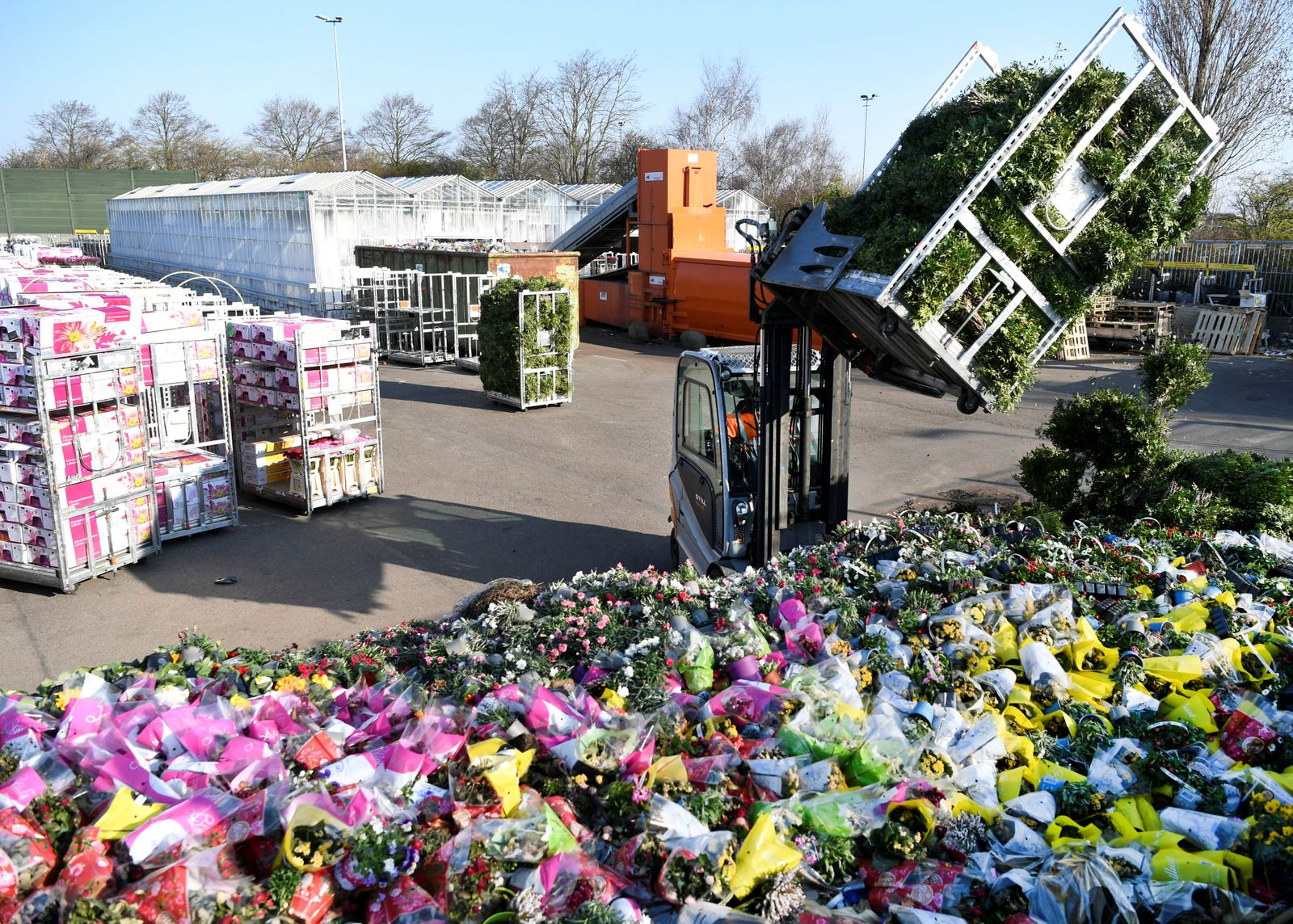 Surplus flowers are destroyed at a waste place next to the flower auction in Honselersdijk