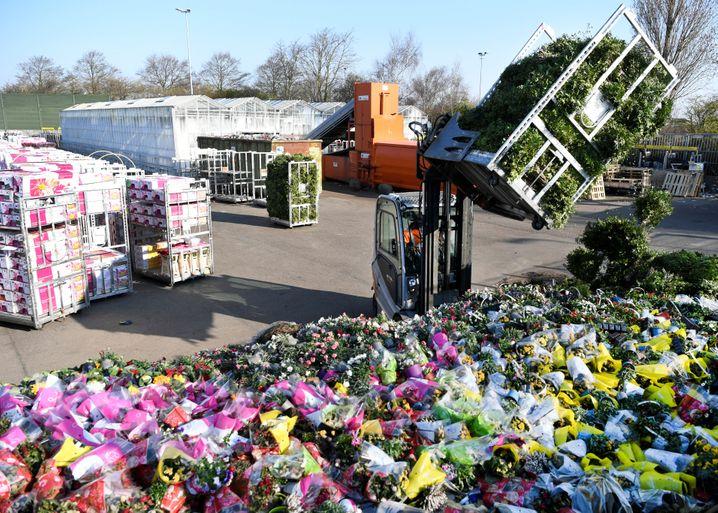 Überschüssige Blumen nach einer Auktion in Honselersdijk im Süden der Niederlande Ende März