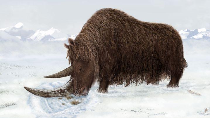 "Fund im Permafrost: Wollnashorn ""Sasha"""