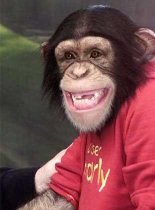 Affe: Schallendes Gelächter beim Toben