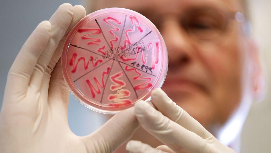 Petrischale mit Ehec-Bakterienkultur: Erstes Todesopfer in Deutschland bestätigt