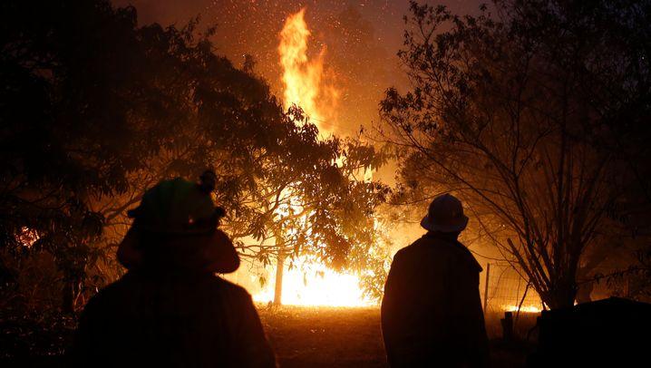Buschfeuer in Australien: Ein Land im Krisenmodus