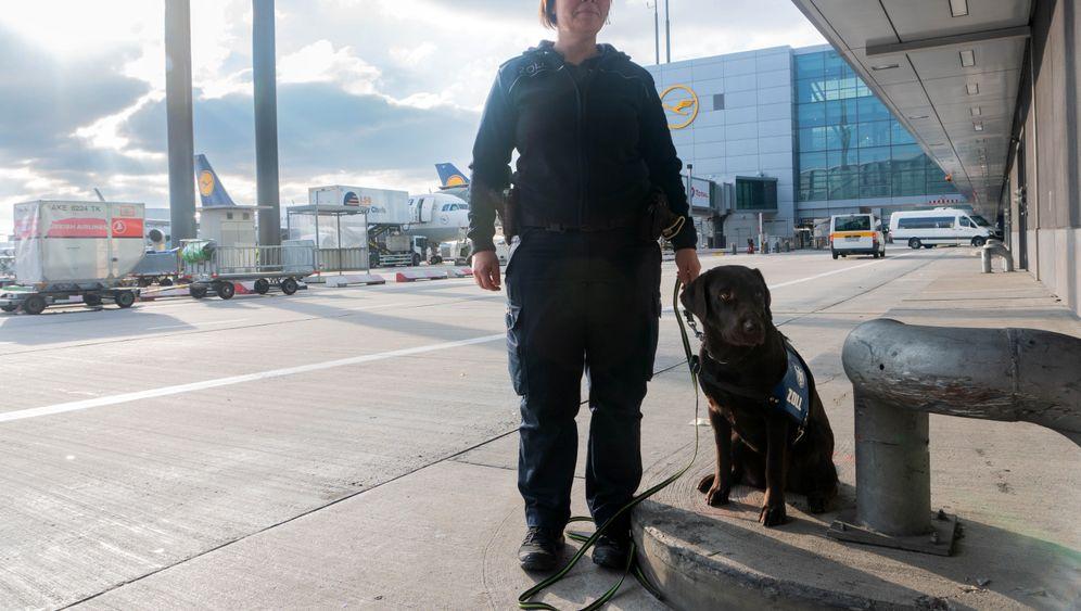 Artenspürhund: Auf Streife am Flughafen Frankfurt