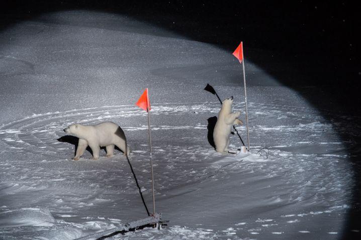 Preisgekrönt: Eisbären inspizieren eine Forschungsstation der Mosaic-Expedition. Für das Foto wurde Horvath mit dem World Press Photo Award in der Kategorie »Umwelt« ausgezeichnet