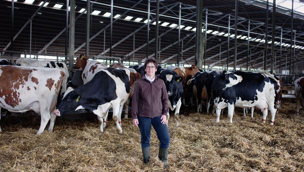 Kuhhaltung in der Preiskrise: Milch und Markt