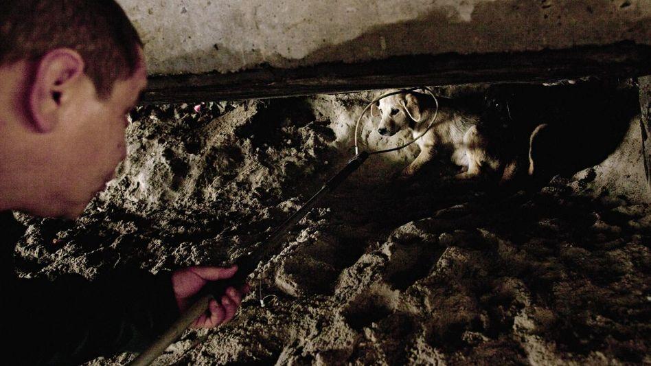 Hundefänger in Odessa: Bei sehr ängstlichen Geschöpfen nutzen die Männer einen Fangstab oder ein Blasrohr