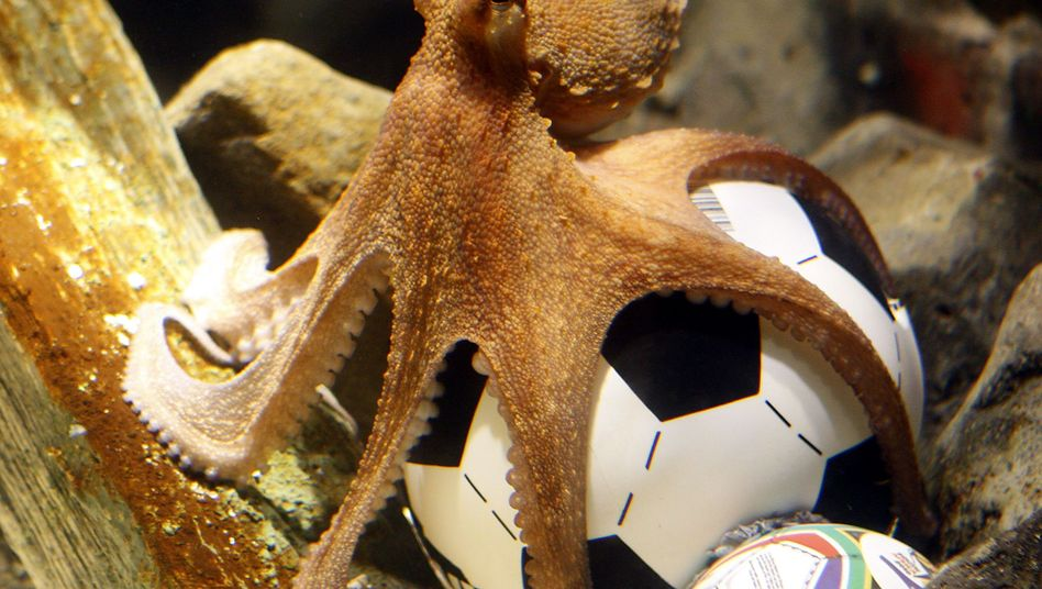 WM-Orakel Paul: Wie ein Oktopus zum Hellseher wird