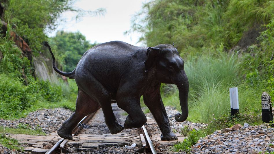 Wild lebender Elefant in Indien (Archivbild)