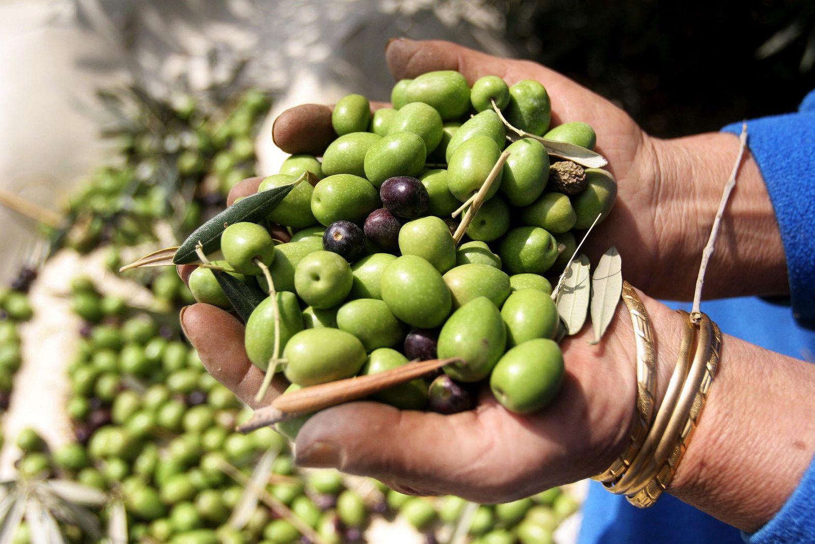 Oliven / Olivenöl