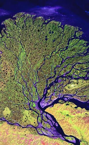 The Lena River flowing through Russian Siberia and empties into the Arctic Ocean. This satellite image shows the river delta, where methane concentrations are unexpectedly high.