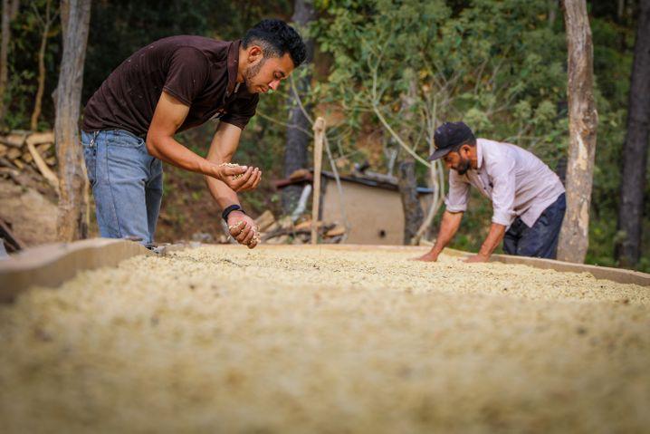 Coffee farmer Israel Rodríguez