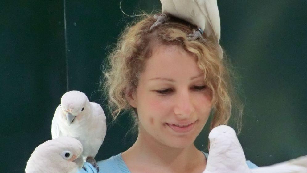 Clevere Vögel: Kakadus warten auf ein gutes Tauschgeschäft