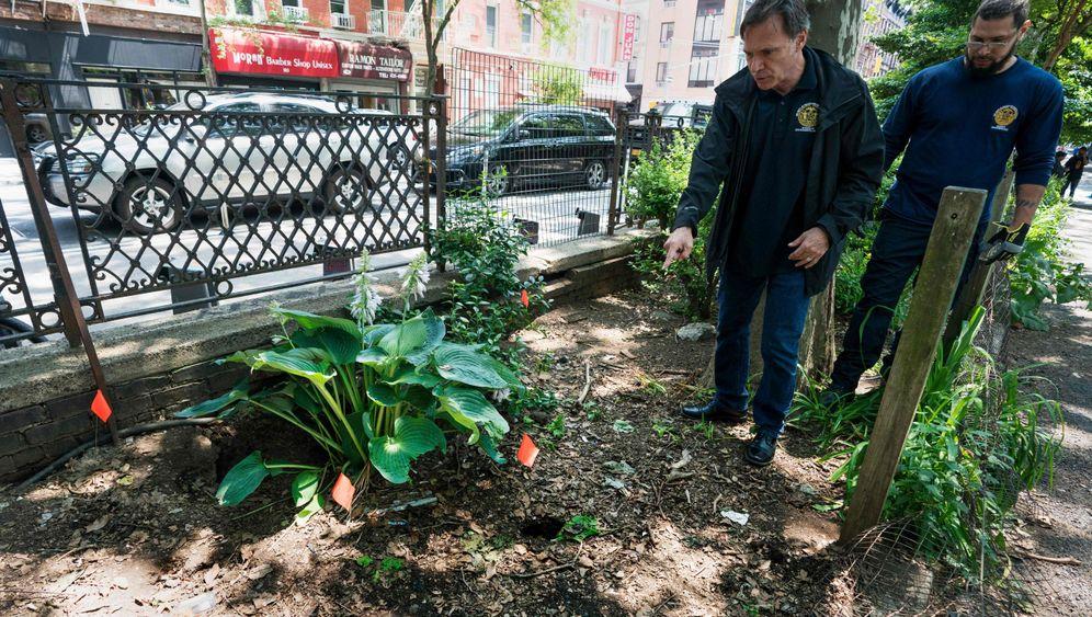 Trockeneis: New York macht seine Ratten kalt