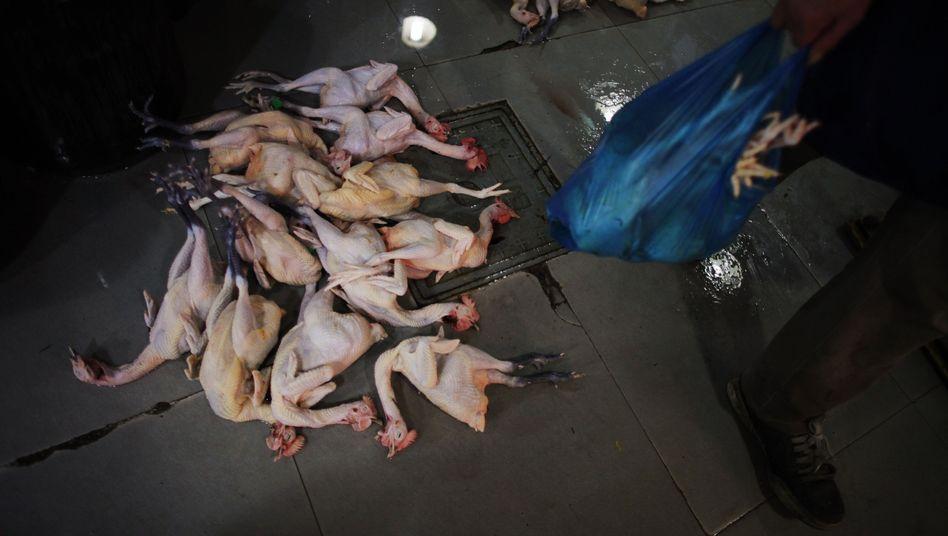 H7N9-Virus: Vogelgrippe breitet sich in China aus