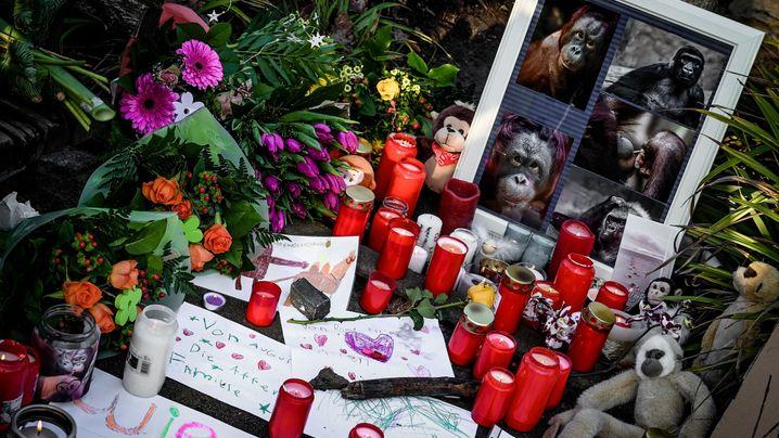 Krefelder Zoo: Stille Trauer um geliebte Affen