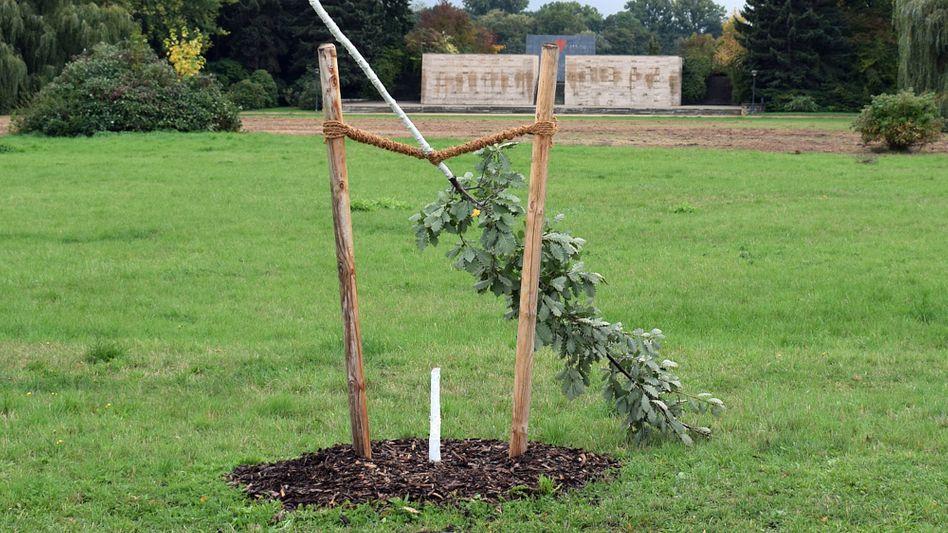 Dieses Foto der abgesägten Eiche hatte die Stadt Zwickau in der vergangenen Woche veröffentlicht: Mit dem Baum und der Gedenktafel davor sollte an Enver Simsek erinnert werden
