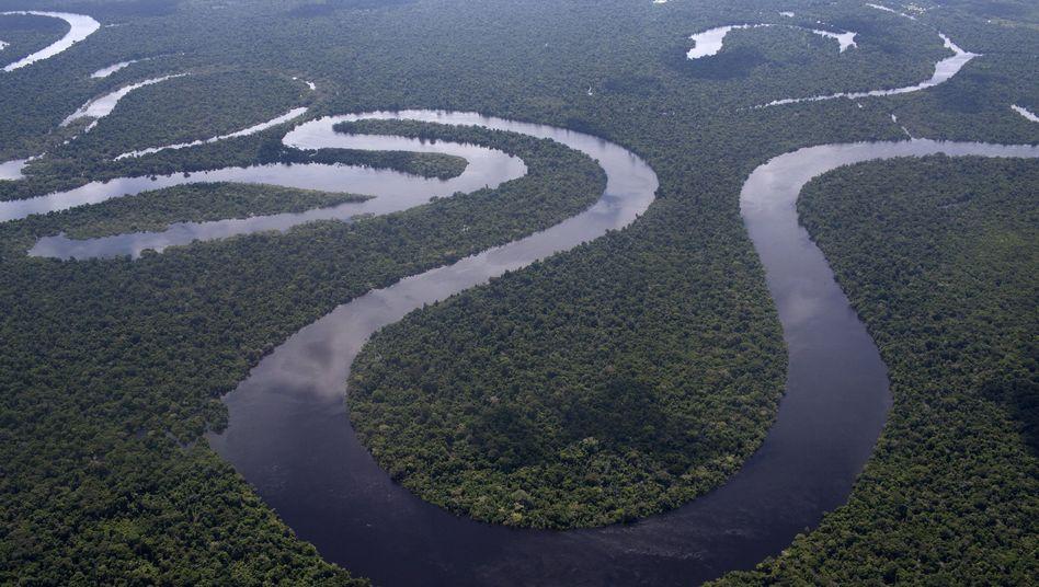 Amazonas-Regenwald: Vermisste Frau und Kinder nach mehreren Wochen aus dem Dschungel gerettet