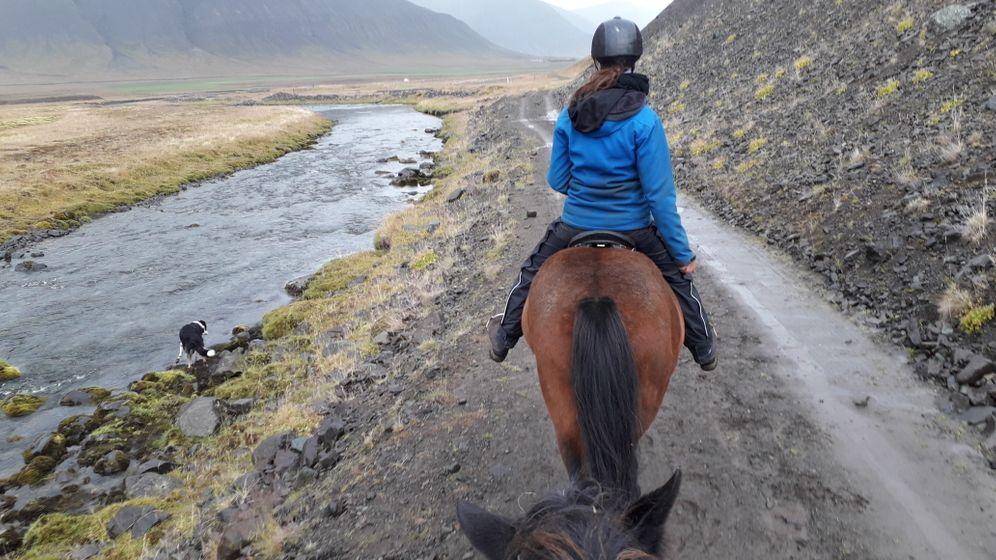 Westfjorde in Island: Ein Tag mit Islandpony