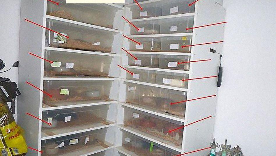 Plastikboxen mit Schlangen (Polizeifoto)