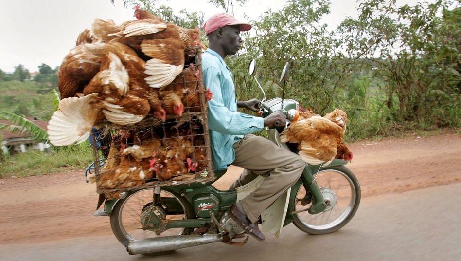 Afrikanischer Geflügelbauer: Figuren und Schicksale, die in ihrer Wucht kaum zu ertragen sind