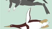 Forscher entdecken Monster-Pinguin