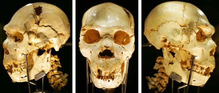 Schädel des Homo heidelbergensis: Alter und Gattung müssen richtig datiert werden
