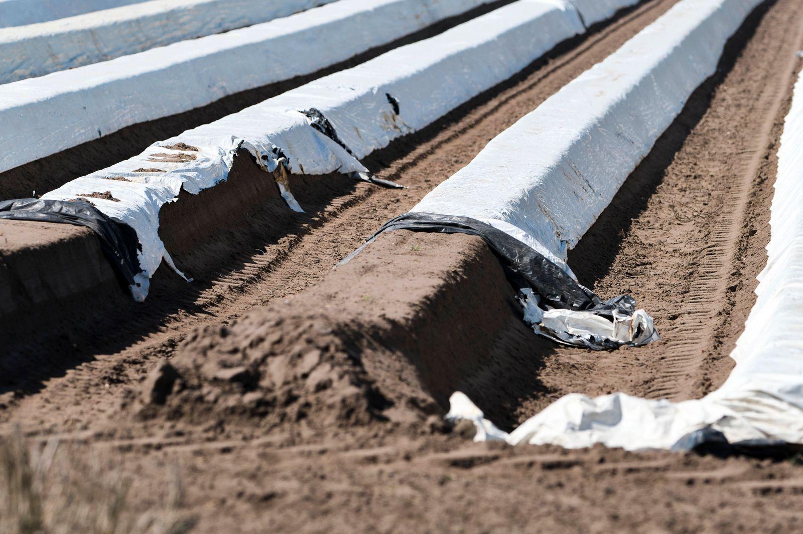 Vorbereitung der Spargelernte. Fuhrberg, 11.04.2020 *** Preparation of the asparagus harvest Fuhrberg, 11 04 2020 Foto: