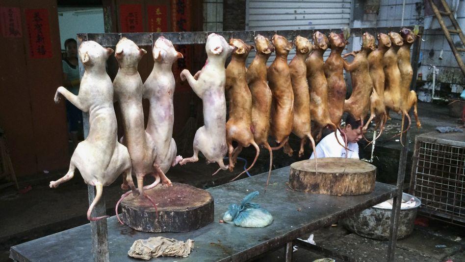 Vorbereitungen auf das Festival in Yulin: Hundefleisch am Haken