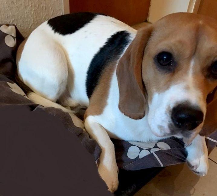 Die Polizei bittet um Angaben zum Besitzer des Hundes