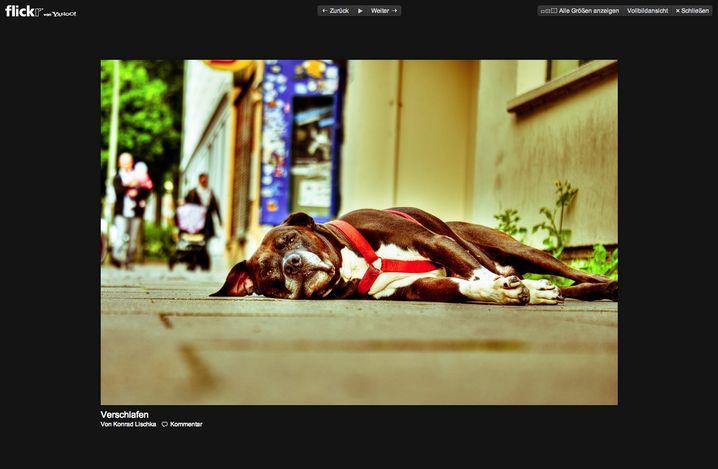Flickr: Das Foto-Netzwerk erneuert sich nach langem Schlaf