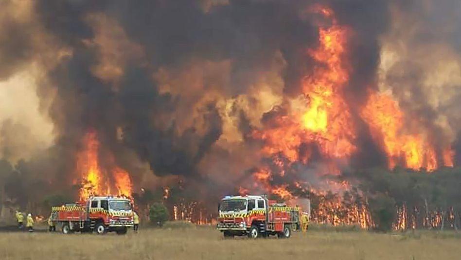 Feuerwehreinsatz in New South Wales: Am Wochenende werden extreme Bedingungen erwartet