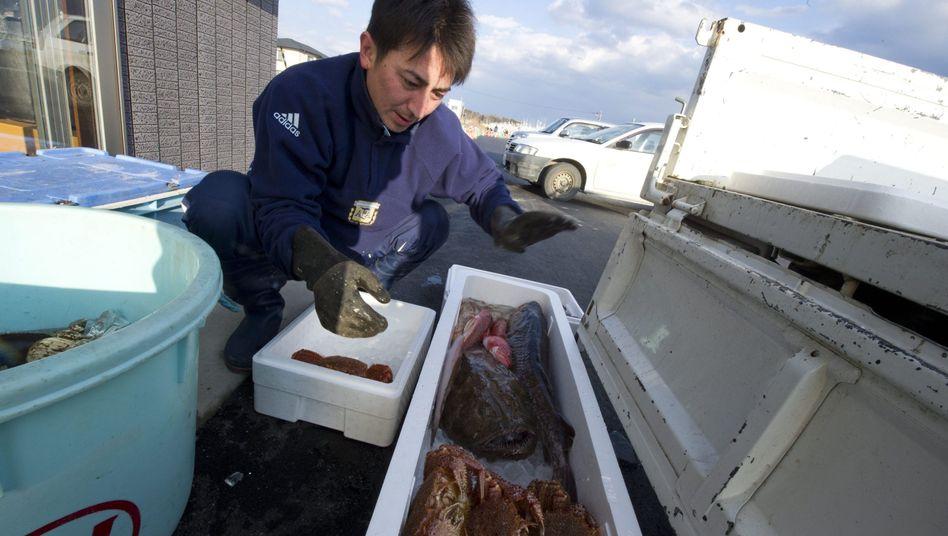 Fischer in der Präfektur Fukushima: Kollaps der lokalen Fischerei