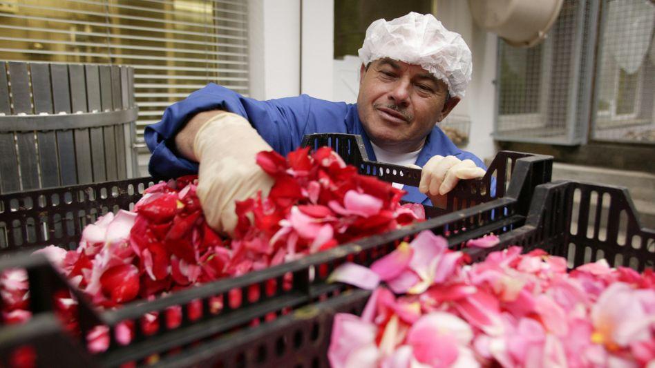 Rosen aus Afghanistan: Bis zur ersten Lieferung werden wohl Jahre vergehen