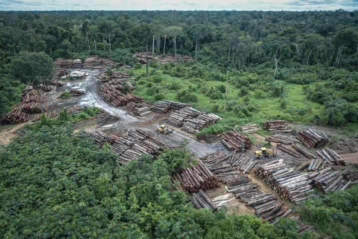 Holzschlag im Amazonas-Gebiet: Der rechtspopulistische Präsident Jair Bolsonaro hält wenig vom Schutz des Regenwaldes
