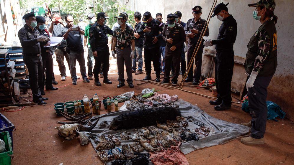 Thailand: Umstrittener Tiger-Tempel